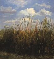 Wondrous Climbing Weeds and Sky
