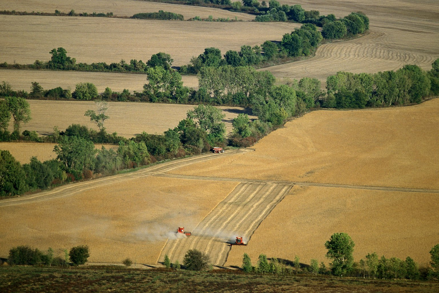 Fields during harvest